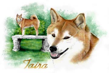 "A commissioned 16""x20"" Watercolour Painting of Keith and Martha's precious Sheba Inu, Taira. At the time, she was dying of carcinoma and they wanted a lasting memory of her. I was honoured to meet Taira, but she was NOT impressed with me! Believe she didn't like that when I visited, her folks were so sad. She was their 'Great Love' and they, her's."