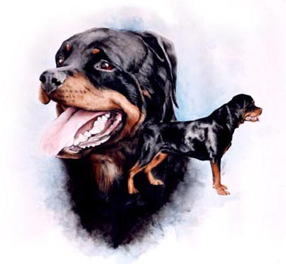Gil, a Courageous Rottie Painting was commissioned as a gift for his human mom, Miriam. She brought him to Canada to be part of a Seiger Show, but tragically, he developed a brain aneurism and never made it back to Germany. This Painting was a way for those who were part of the Show to convey their sympathy to Miriam.