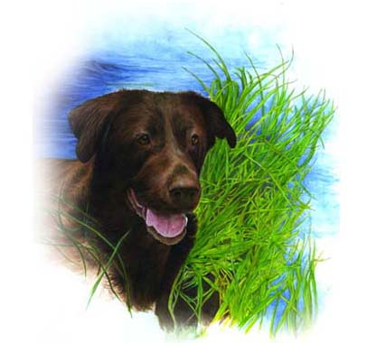 """Zeke's Painting is a 9""""x12"""" Watercolour of a female chocolate lab named Zeke, who was passionate about water, thus this was where she was placed! Sandra had Zeke's Painting commissioned as  a Christmas present for her husband."""