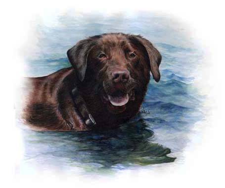 Harvey, a Chocolate Lab was commissioned by his doting owner, for me to do his likeness after purchasing my donation at a Fundraising ceremony for the Markham Hospital. This piece of Art I've replicated on several products. Be sure to check them out on my Shop!
